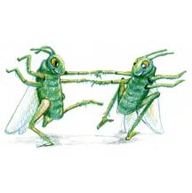 """""""Grass Hoppers Dancing"""""""