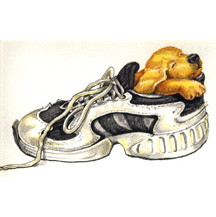 Dog in Shoe by Kit Colman