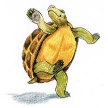 """Dancing Turtle"""