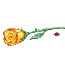 Rose and Lady Bug - By Kit Colman